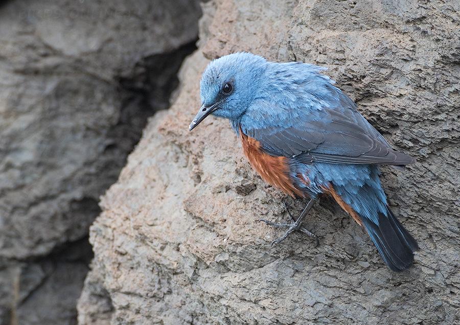 Птицы дагестана фото