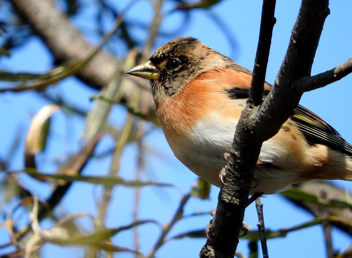 птицы перми название и фото годы радует как