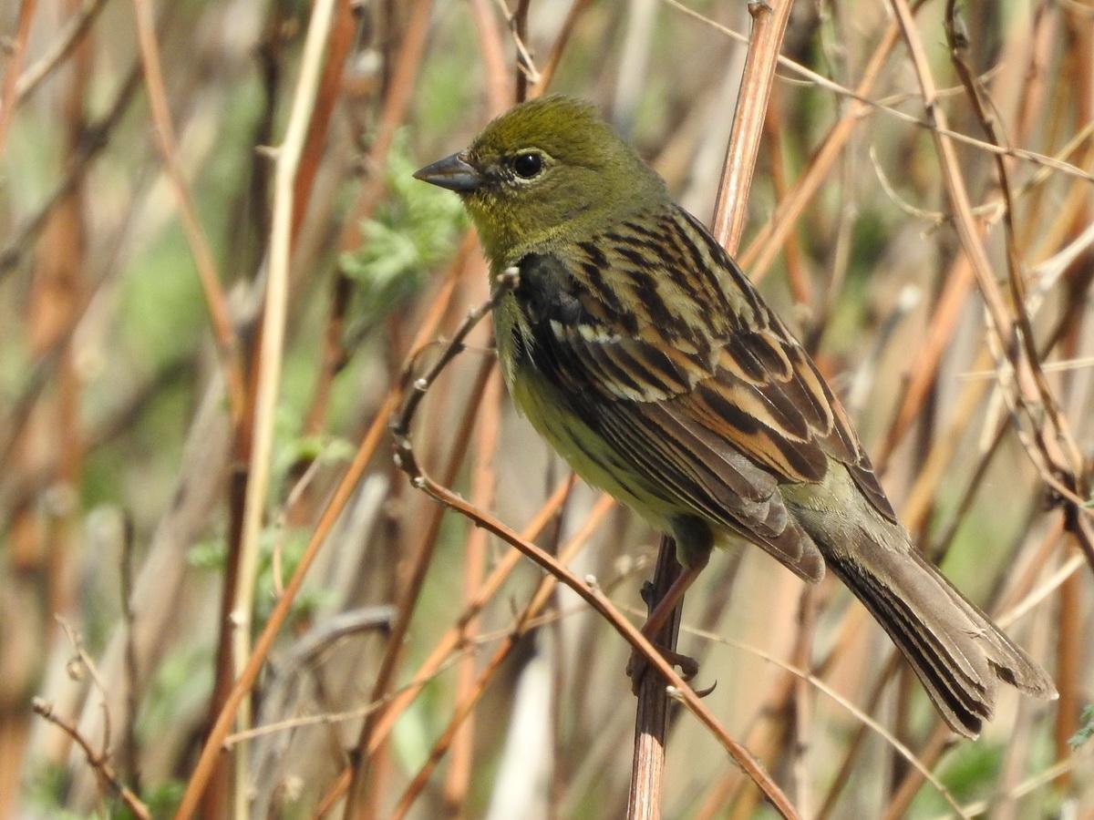 Все перелётные птицы: картинки с названиями и описаниями   900x1200