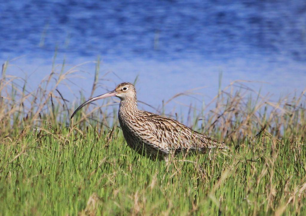 дальневосточная птица фото планирует приступить освоению