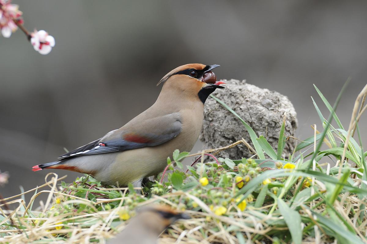Парк птиц воробьи фотографии люкса погоде