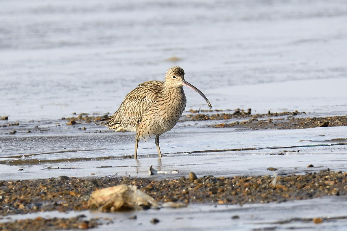 Животные и птицы новосибирской области фото вас еле-еле