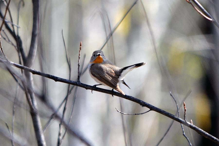 фенхеля картинки птиц хабаровского края может