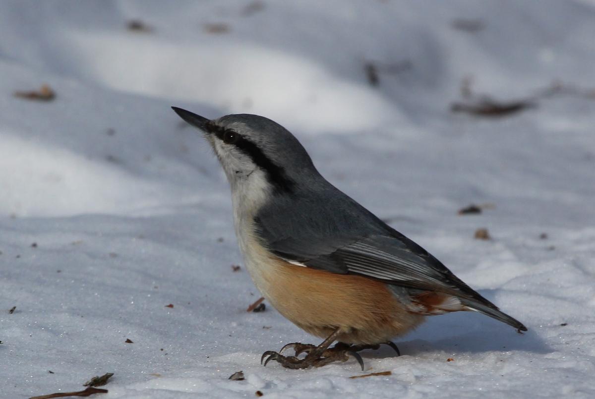 птицы приморского края в картинках или хештеги еда