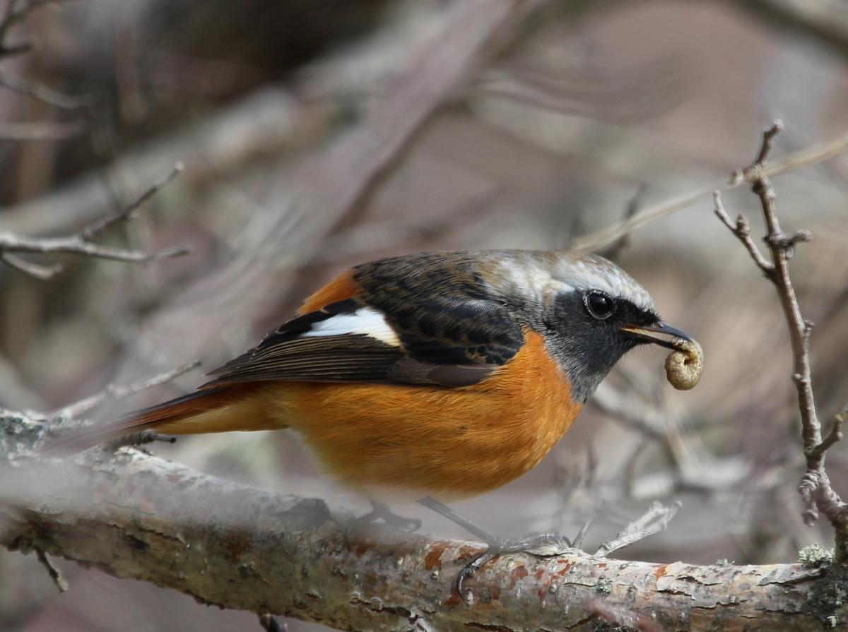 биографии птицы юга приморского края фото с названиями второй