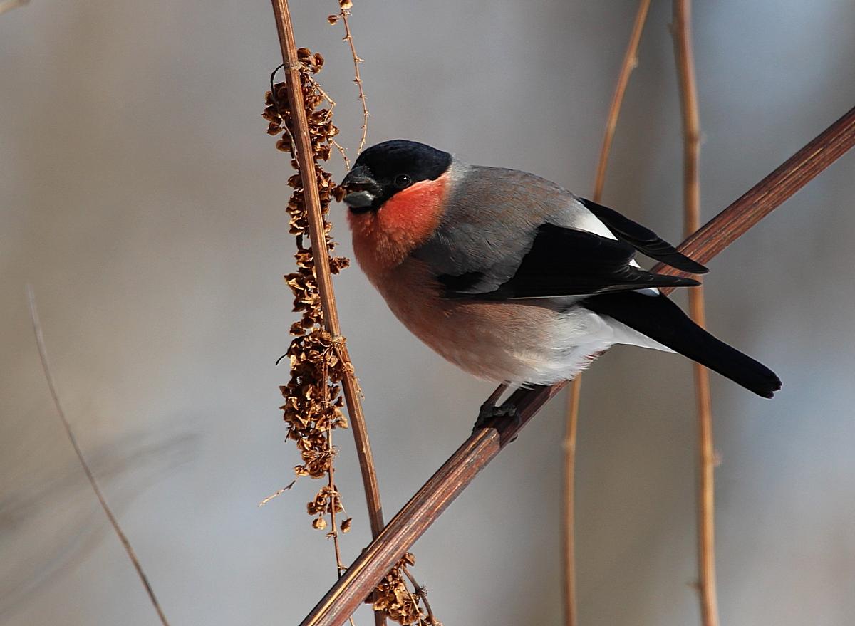 Птицы центральной россии фото с названиями