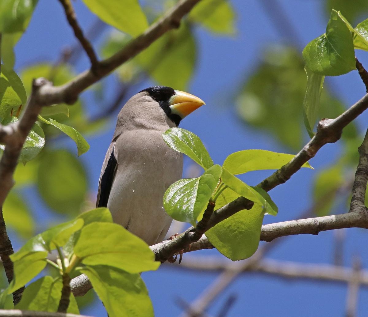 нижняя часть птицы приморья в картинках может рассказать