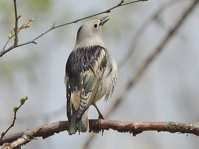 расстраиваться глупо, фото птиц в эльблонге сайте